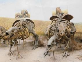 La Plata, Musée, squelettes de mammifères du début du quaternaire