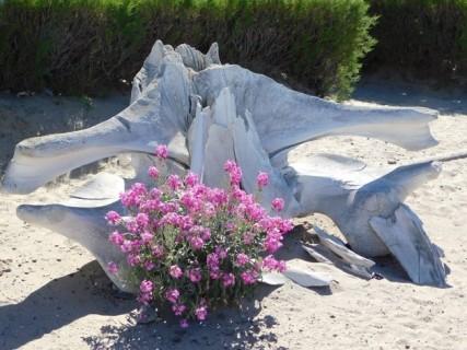 Péninsule de Valdès, Puerto Pyramides, squelette de baleine