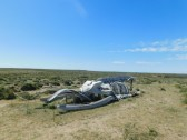 Péninsule de Valdès, Punta Delgada, squalette de baleine