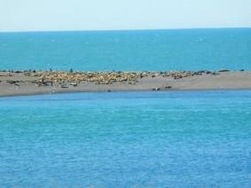 Péninsule de Valdès, Caleta Valdès, éléphants de mer