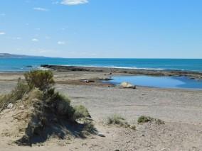 Plage d'Isla Escondida, colonie d'éléphants de mer