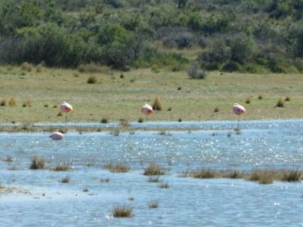 Flamants roses, non loin de la plage d'Isla Escondida