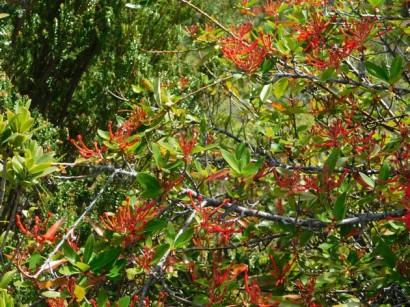 Parc National de Chiloé