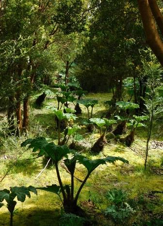 Parc National de Chiloé, Nalca