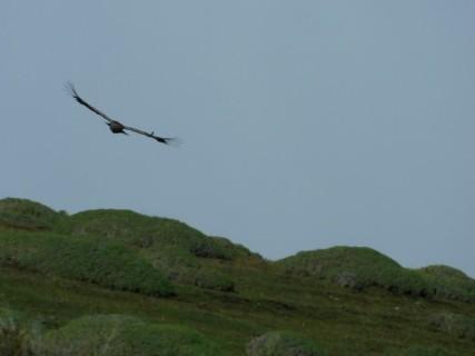 Excursion au Parc Torres del Paine, condor
