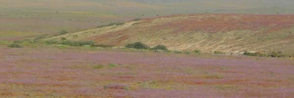 De La Serena au désertd'Atacama