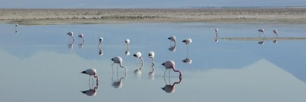 Une journée aux lacs de l'Altiplano et au Salar deTalar