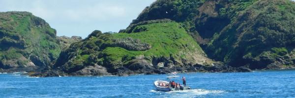 Retour à Chiloé, à la pinguinerad'Ancud