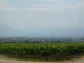 Cafayate, des vignes à perte de vue !