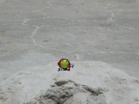 Salar d'Uyuni, Dodole dans le sel !