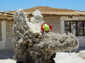 Salar d'Uyuni, hôtel / restaurant de sel