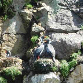 Pinguinera, vers Ancud