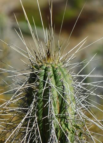 Vallée de l'Elqui - Barrage, cactus
