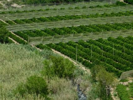 Vallée de l'Elqui, on voit beaucoup de cultures protégées par des bâches ou des filets...