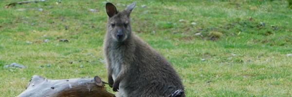 Une journée à Christchurch, entre parc animalier et centre-ville dévasté par le séisme de2011