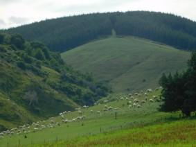 Sur la route, entre Wanaka et Dunedin