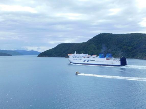 Vue depuis le ferry Wellington / Picton