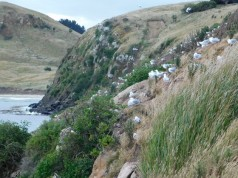 Moeraki, Katiki Point Lighthouse