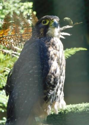 Parc animalier Willowbank Wildlife Reserve