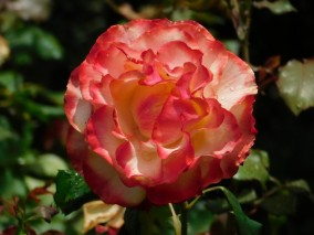 Christchurch, jardin botanique