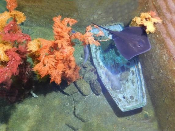 Aquarium de Picton