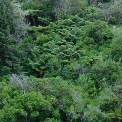 Kaiteriteri, végétation très dense