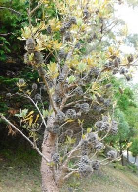 Wellington, Jardin botanique