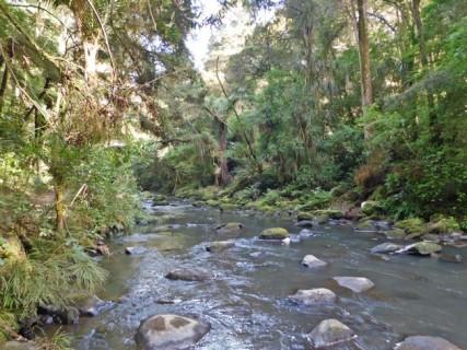 Balade vers les Whangarei Falls