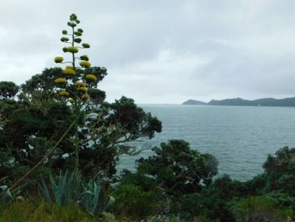 Waitangi Treaty Grounds, vue sur Bay of Island depuis le lieu où à été signé le traité