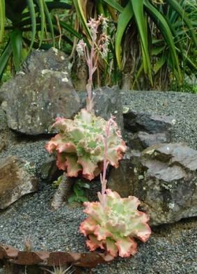 Whangarei Quarry Garden