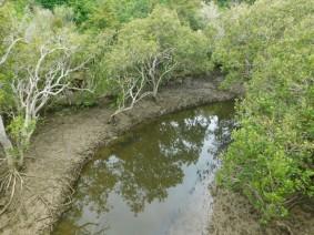 Waimahanga Track, mangrove