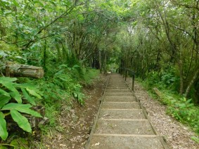 Waimahanga Track