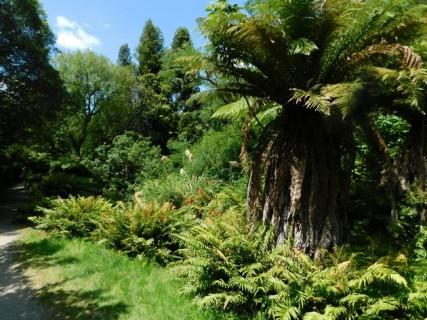 Rotorua - Burried Village