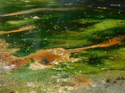 Waimangu Volcanic Valley - Sources d'eau chaude et dépôts colorés