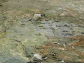 Parc géothermal Wai-O-Tapu - Boucle jaune
