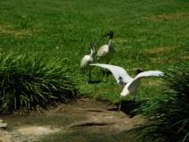 Brisbane - Jardin Botanique