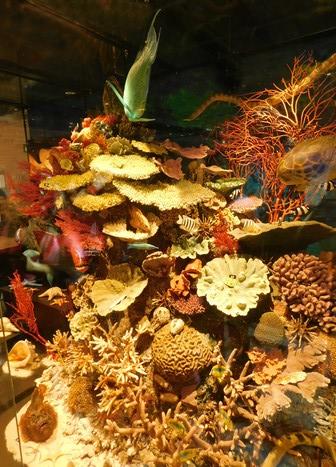Brisbane - Queensland Museum, facsimilé d'un morceau de la Grande Barrière de Corail