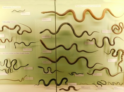 Brisbane - Queensland Museum