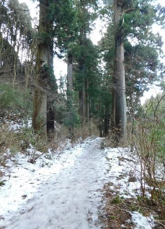 Hakone - Allée des Vieux Cèdres