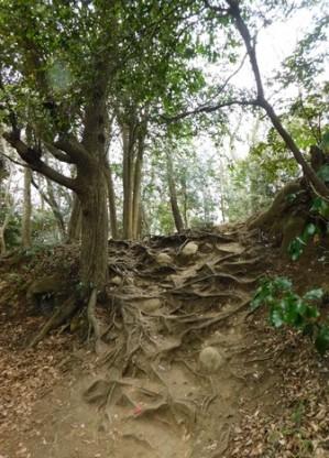 Kamakura - Chemin de randonnée du Daibutsu
