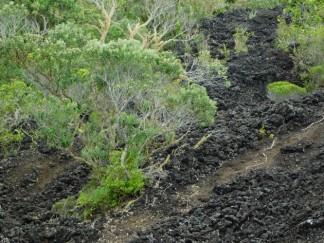 Ile de Rangitoto