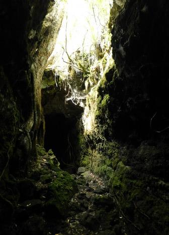 """Ile de Rangitoto - """"Grotte de lave"""""""