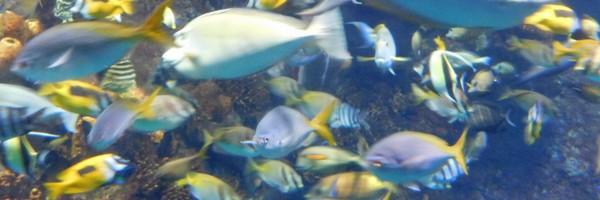 Une superbe plongée dans l'aquarium d'Osaka