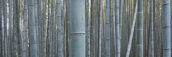 Bambous et temples àArashiyama