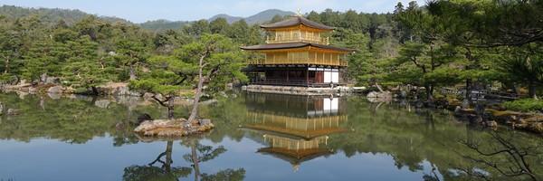 Cerisiers en fleurs et Temple du Pavillon d'or àKyoto