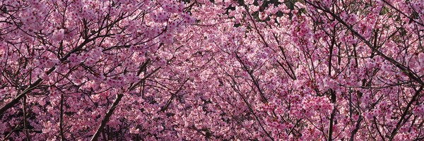 Bain de fleurs àKyoto…