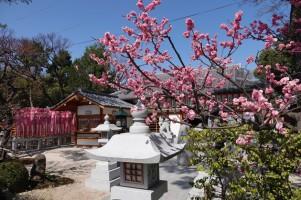 Osaka - Temple Sumiyoshi-Taisha - Tanekashi-sha
