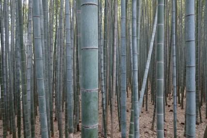 Kyoto - Arashiyama - Bambouseraie