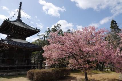 Kyoto - Arashiyama - Temple Seiryo-ji