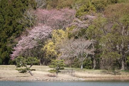 Kyoto - Arashiyama - Temple Daikaku-ji - Au bord de l'étang